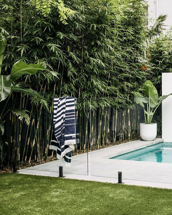 small-and-modern-tropical-pool-design-with-bamboo-plants