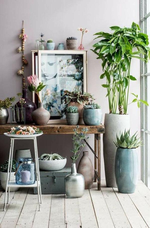 aesthetic-indoor-plant-garden