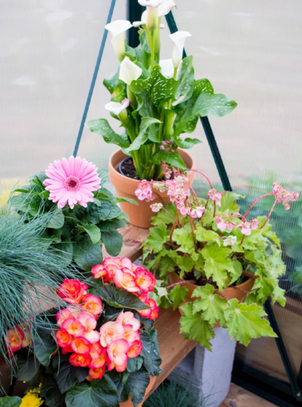 beautiful-floral-ideas-for-small-garden