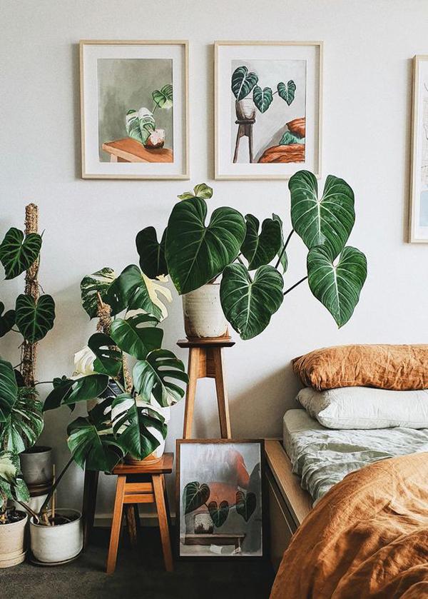beautiful-indoor-plant-decor