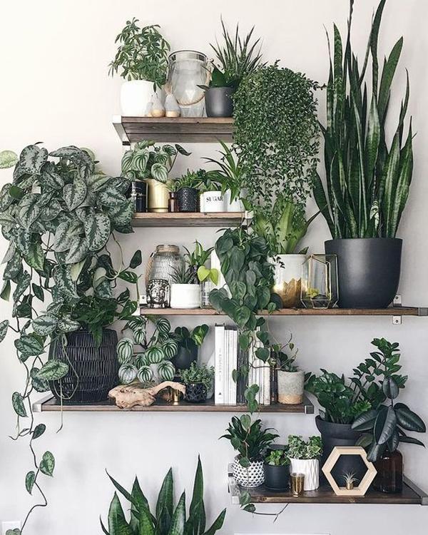 beautiful-wall-plant-rack-ideas