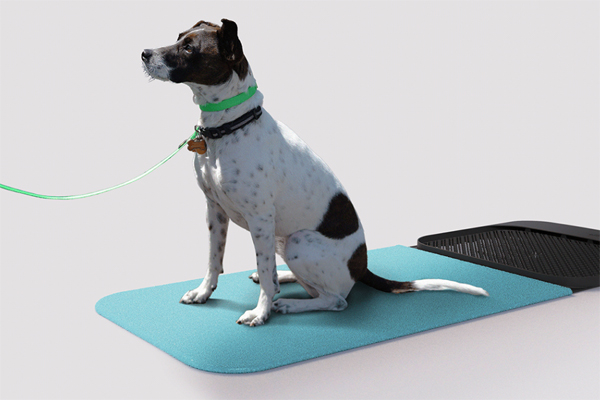 clean-dry-and-disinfect-dog-mat