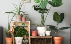 diy-indoor-plant-for-background