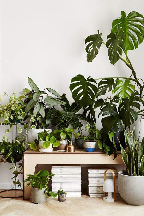 indoor-urban-garden-decor-ideas