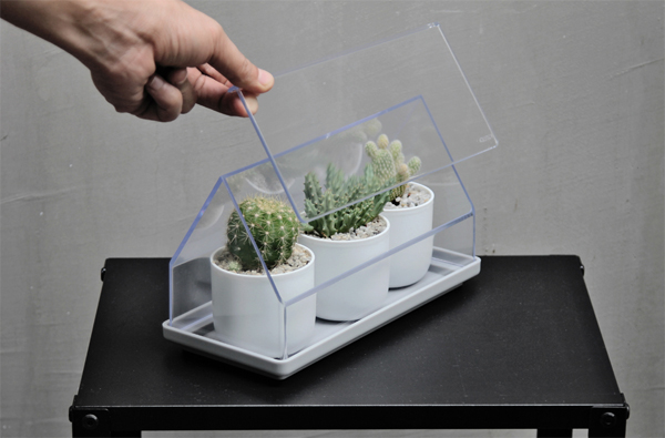 micro-green-house-cactus-plant-cover