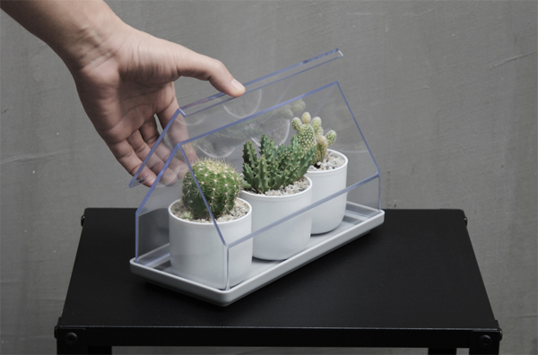 micro-green-house-cactus-plant-tray