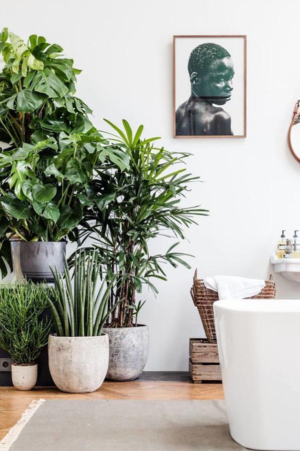 modern-bathroom-with-indoor-plants