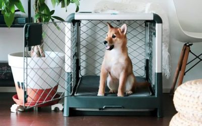 stylish-dog-crates-for-home-decor