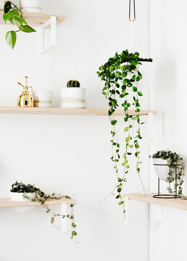 stylish-planter-wall-rack-ideas