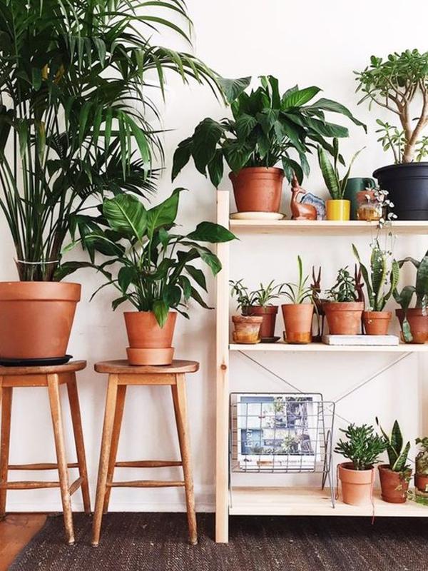terracotta-indoor-plant-decor-ideas
