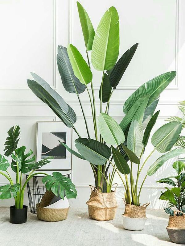 tropical-indoor-plant-pots