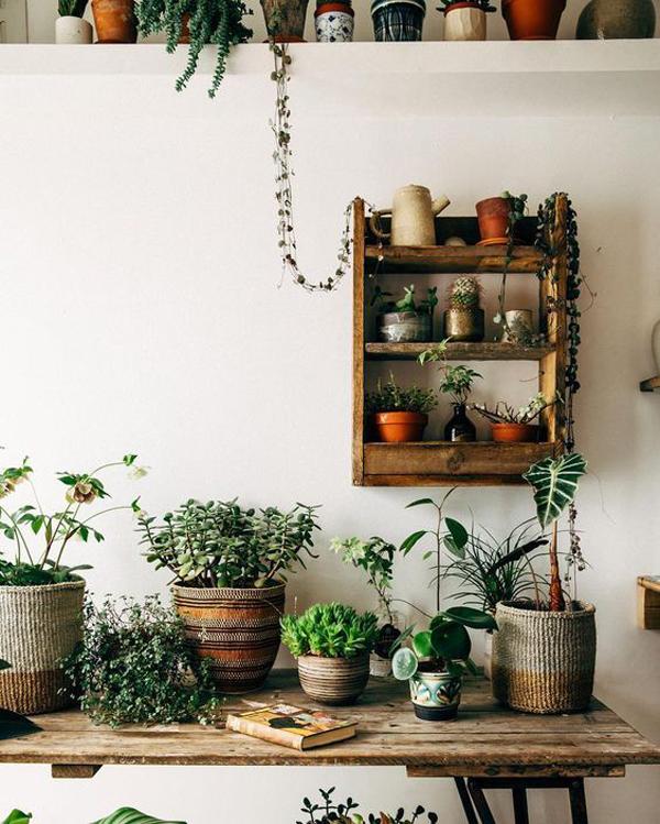 vintage-indoor-plant-decoration