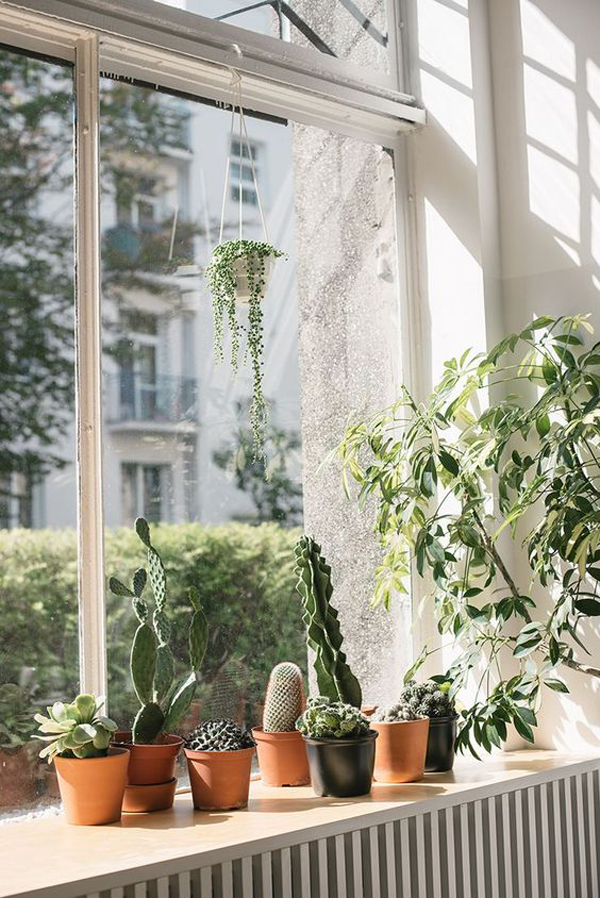 window-plants-with-natural-lights