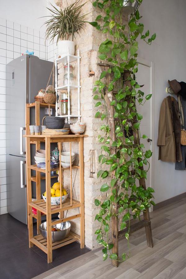 diy-kitchen-vines-ideas