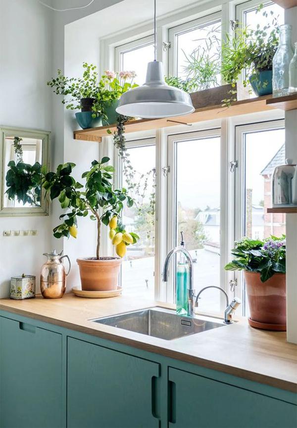 farmhouse-style-kitchen-plant-ideas