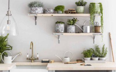 indoor-kitchen-plant-decor