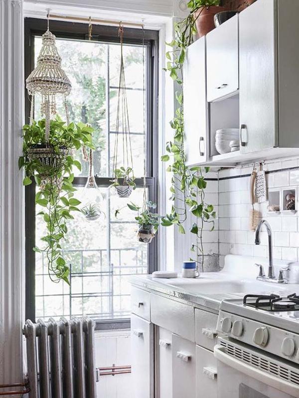 indoor-kitchen-plants-with-large-window