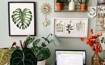 best-tiny-office-houseplants