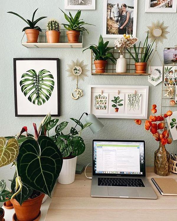 7 Best Tiny Houseplants For Office Desks