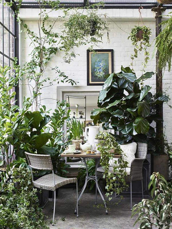 The Jungle Look: Indoor Dining Room With Plants